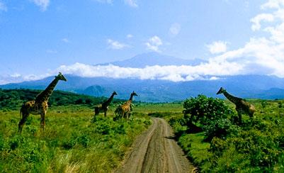 lg_Tanzania-Giraffe